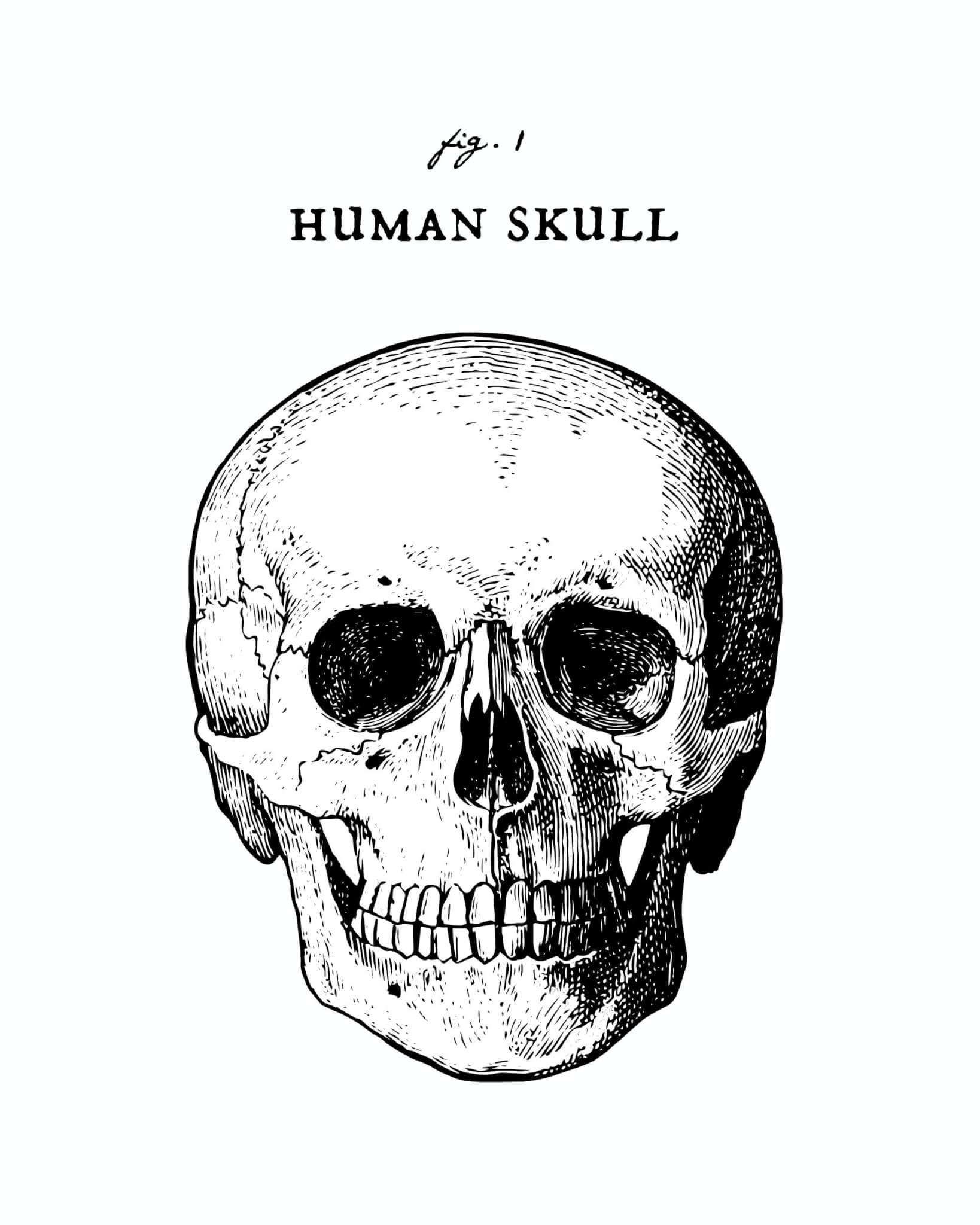 human skull printable