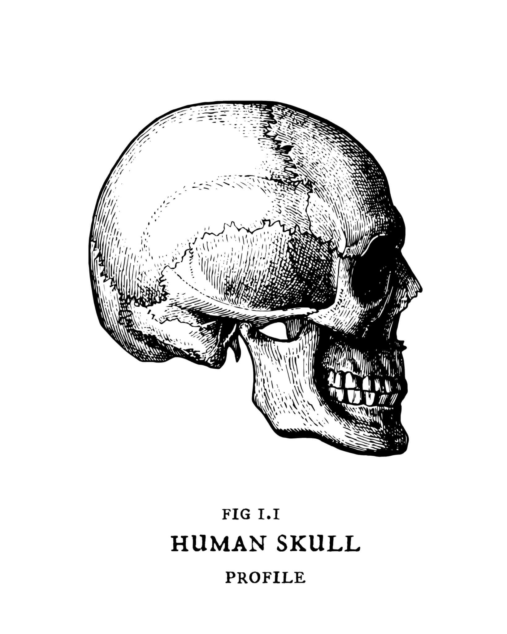 Skull Printable