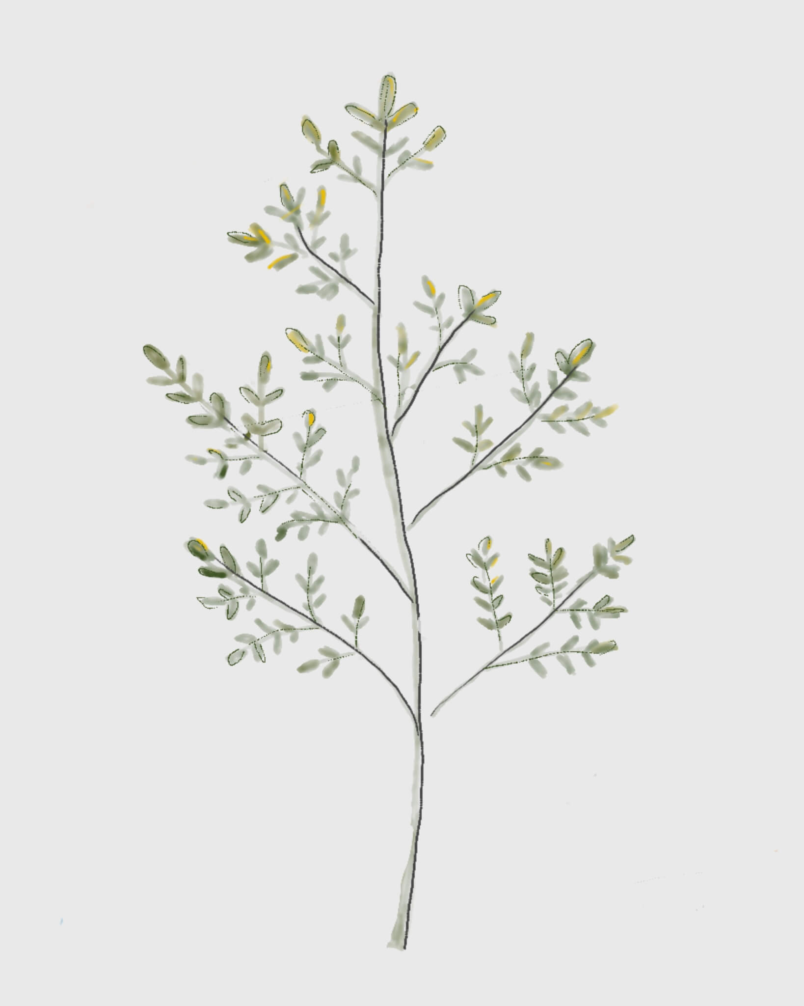 botanical print 7