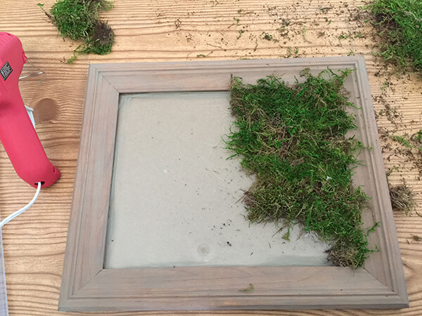 Now a new use for those thrift store picture frames! Check out how easy it is to make this framed moss wall decor! Its a great upcycle!