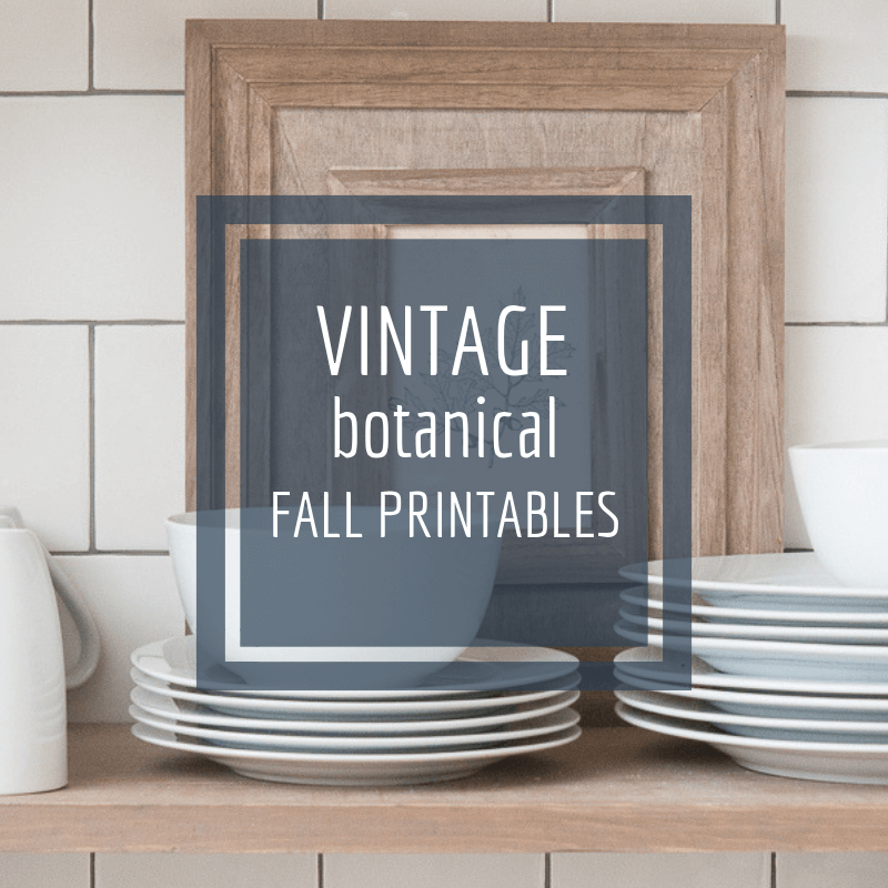 Vintage style botanical fall printables for your home!