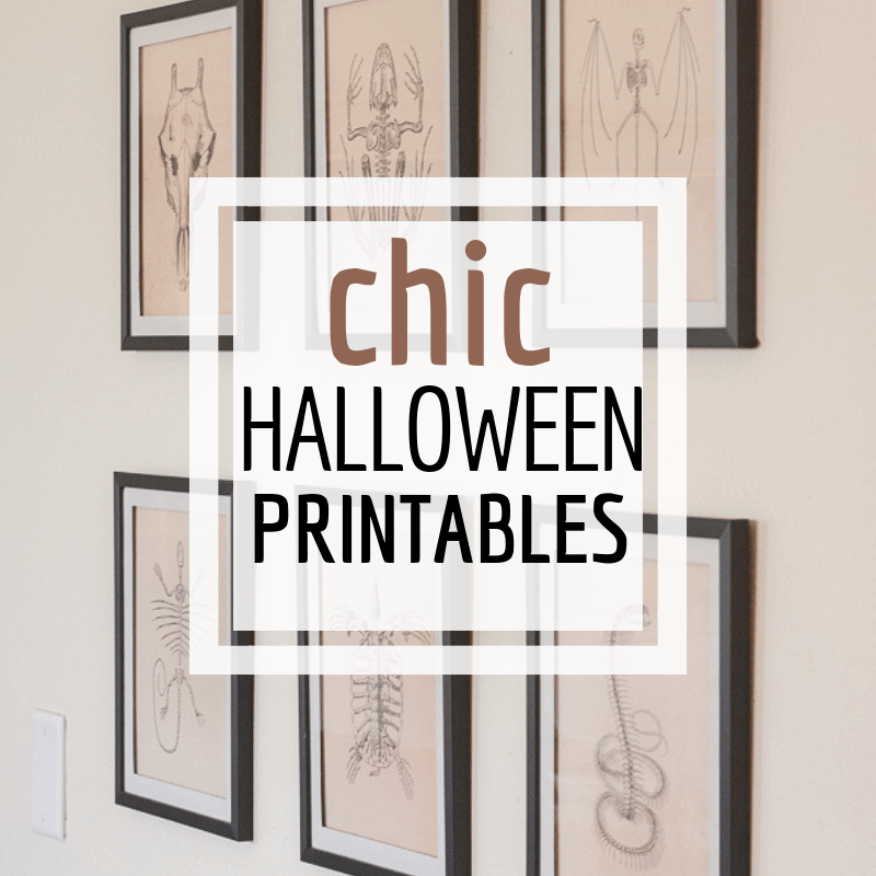Get this entire set of animal skeleton Halloween printables!