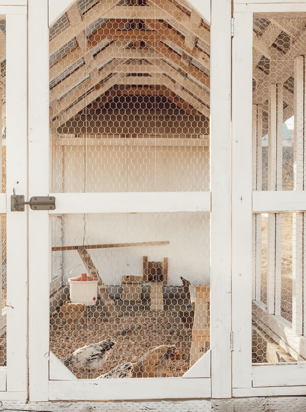 Chicken coop DIY ideas