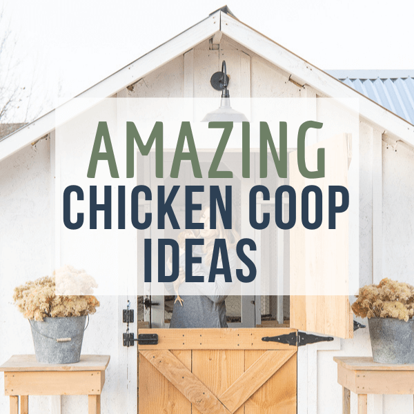 Amazingly Gorgeous and Stylish Chicken Coop Ideas