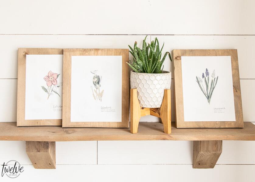 Free Botanical Illustration Printables for Spring!