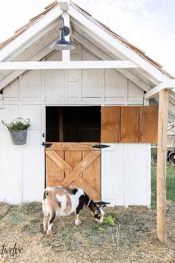 Rustic and white goat barn