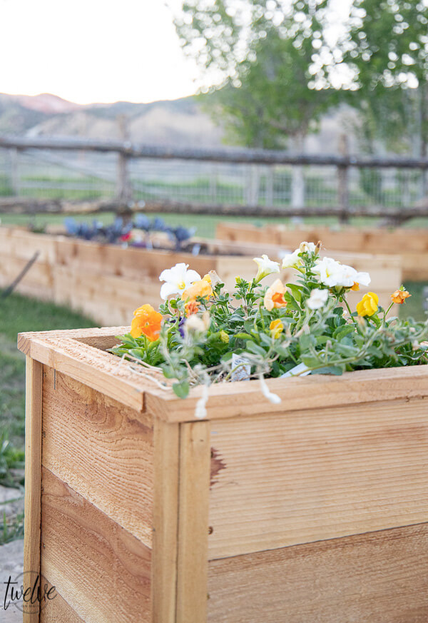 How to make super easy, inexpensive and cute cedar planter boxes to plant flowers, herbs, or evergreen plants.  These are so easy, I did them all by myself!