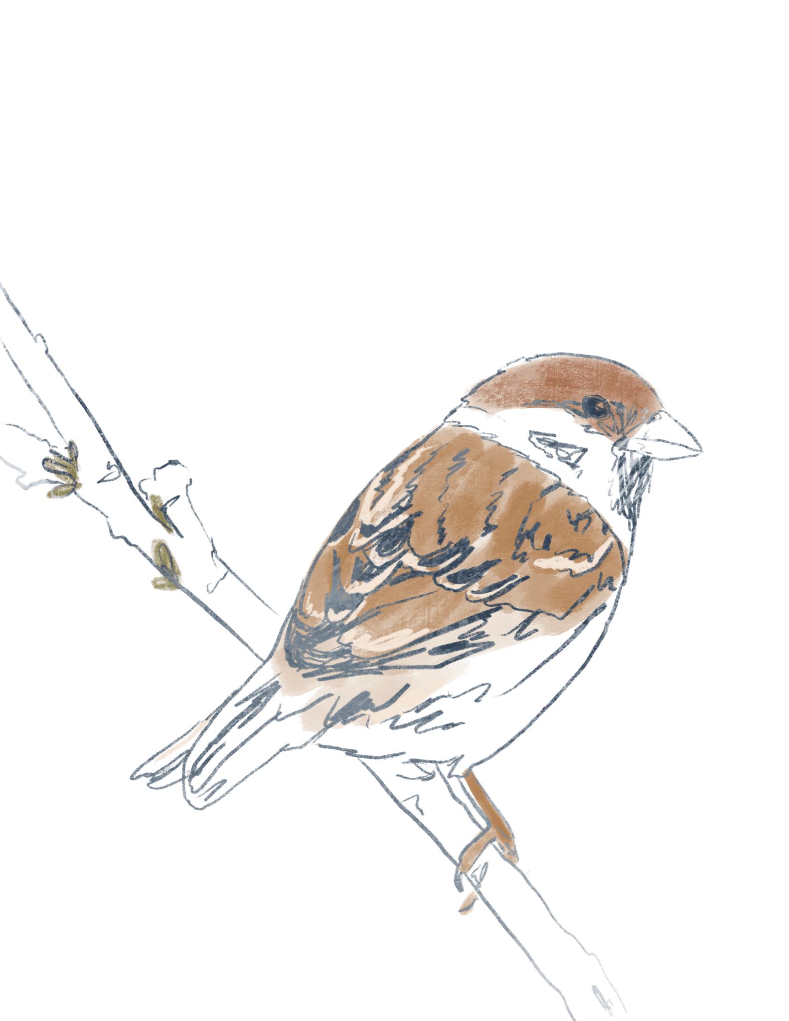 Adorable Hand Drawn Bird Printables