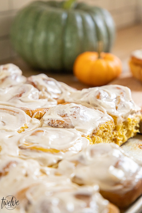 Make these amazing pumpkin cinnamon rolls this fall! They are spiced just right, nice and mild with a hint of pumpkin. Topped with a cinnamon cream cheese frosting, these are to die for!
