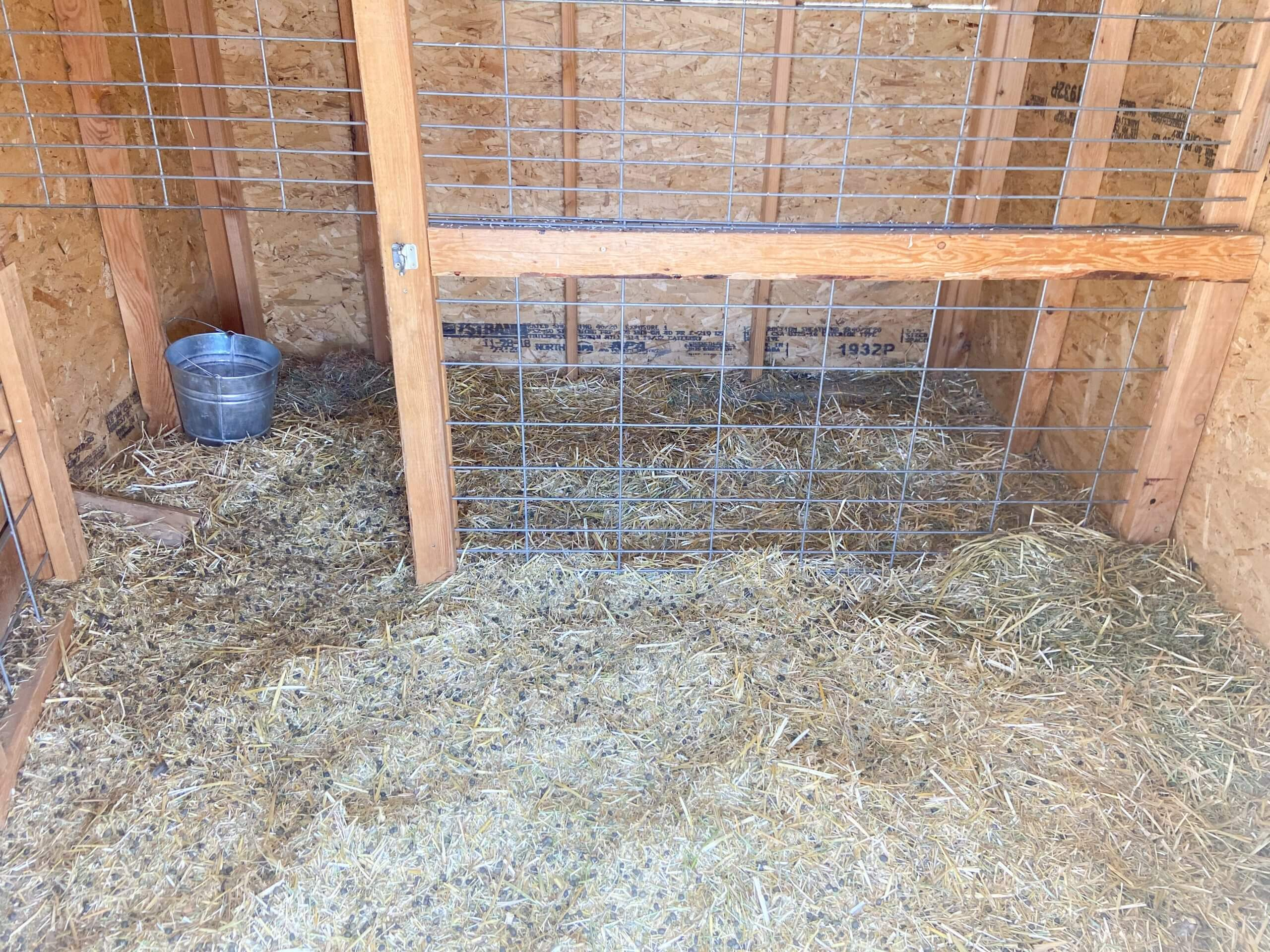 Why We Use the Deep Litter Method with Our Goats and Chickens(Tips and Tricks)